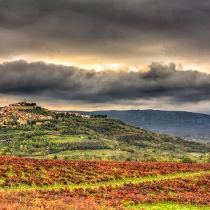 Motovun is an historic village in Istria surrounded by Teran vineyards and a forest rich in truffles.